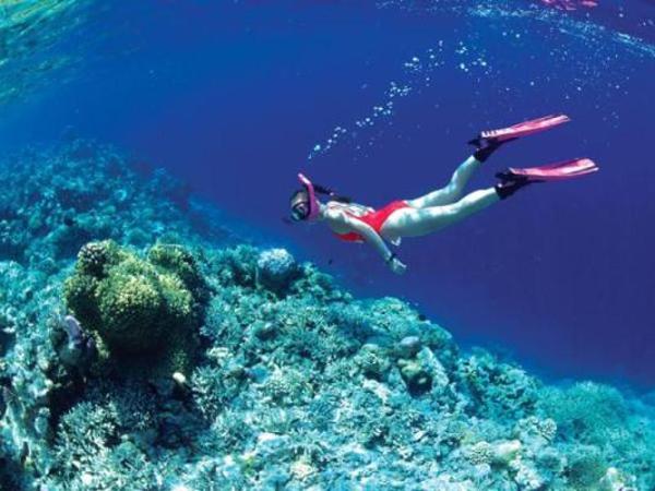 Đến Phú Quốc vào những ngày hè lặn ngắm san hô
