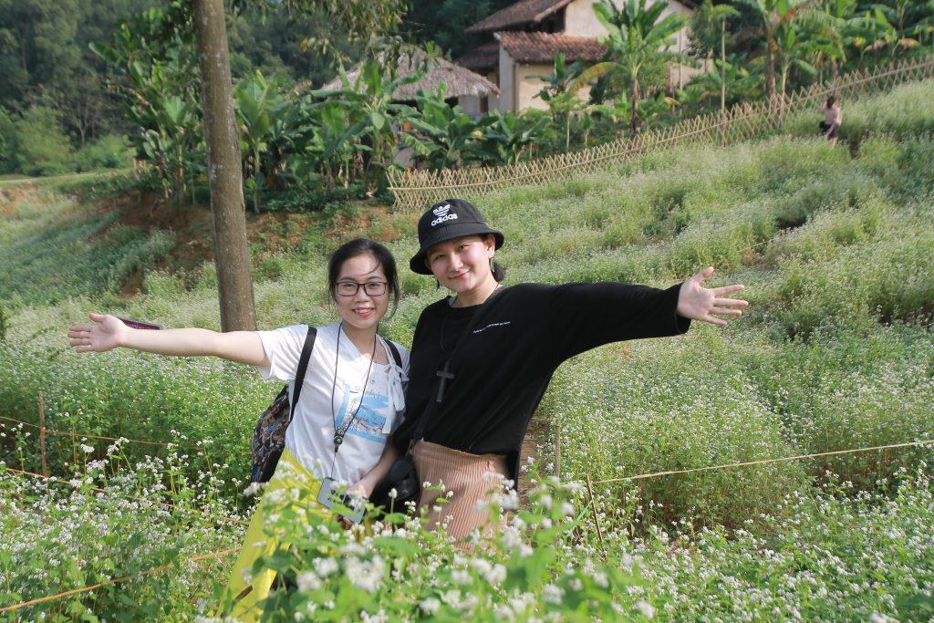 Hoa tam giác mạch ở làng văn hóa