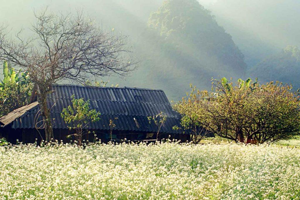 Ngắm hoa Mộc Châu Tà Xùa