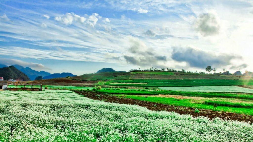 3 Ngày Tết Dương lịch du lịch Mộc Châu Tà Xùa ngắm hoa, săn mây