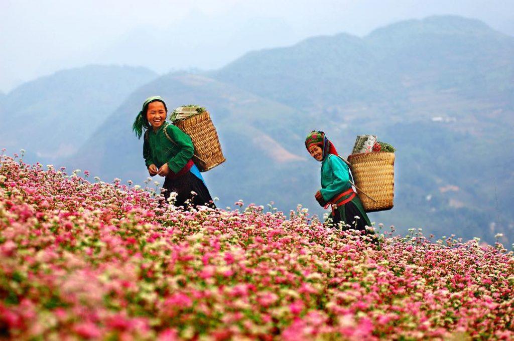Địa điểm giúp bạn ngắm trọn đồi hoa