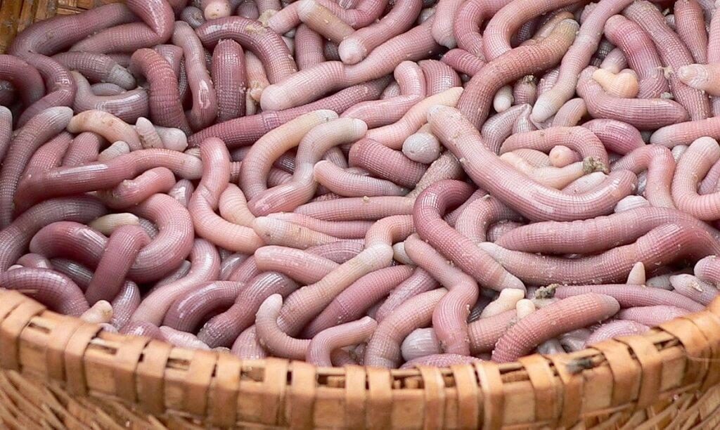 sá sùng hải sản Quảng Ninh