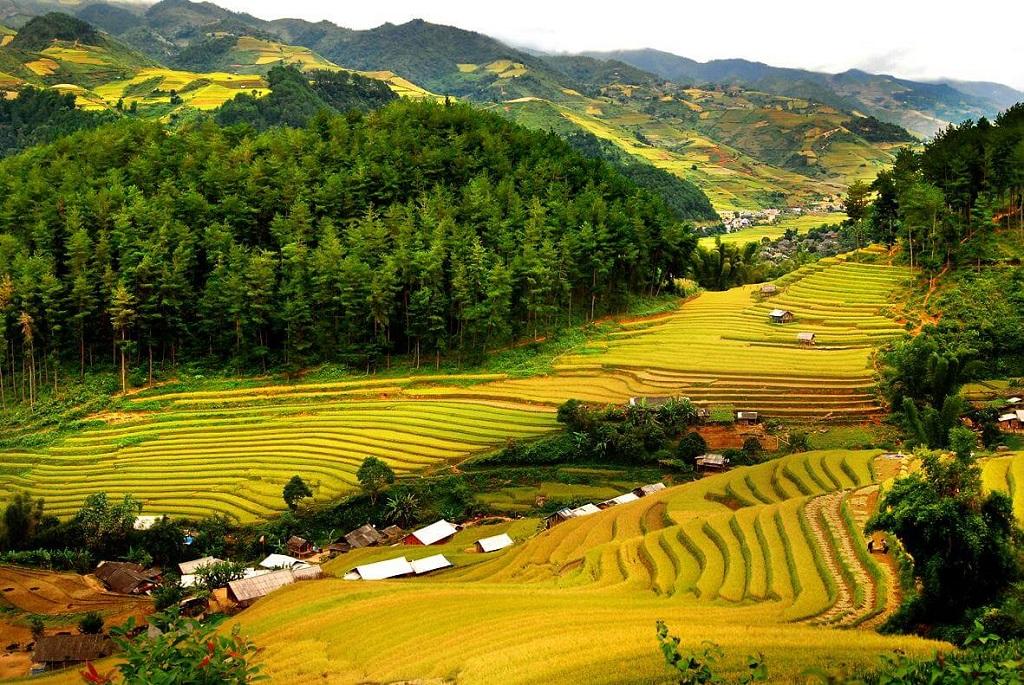 Bạn có thể ngắm lúa chín vàng khi đi Pù Luông vào khoảng tháng 9 – tháng 10