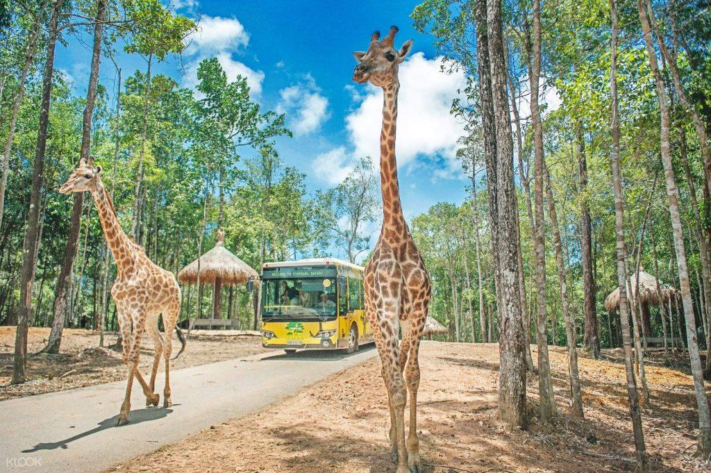 Safari-Phu-Quoc-dia-diem-check-in-phu-quoc