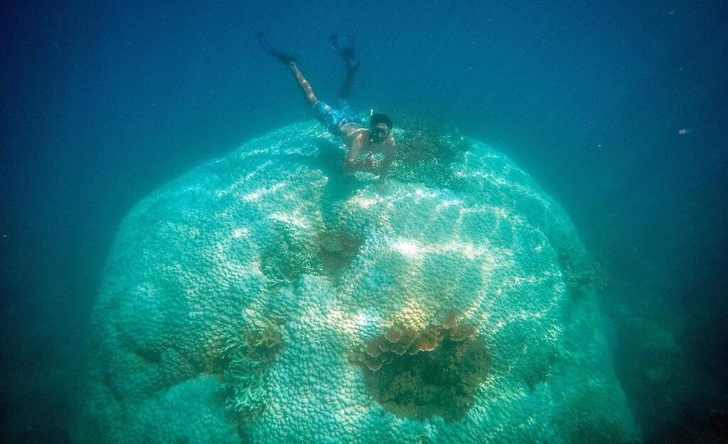 Ngắm san hô Côn Đảo