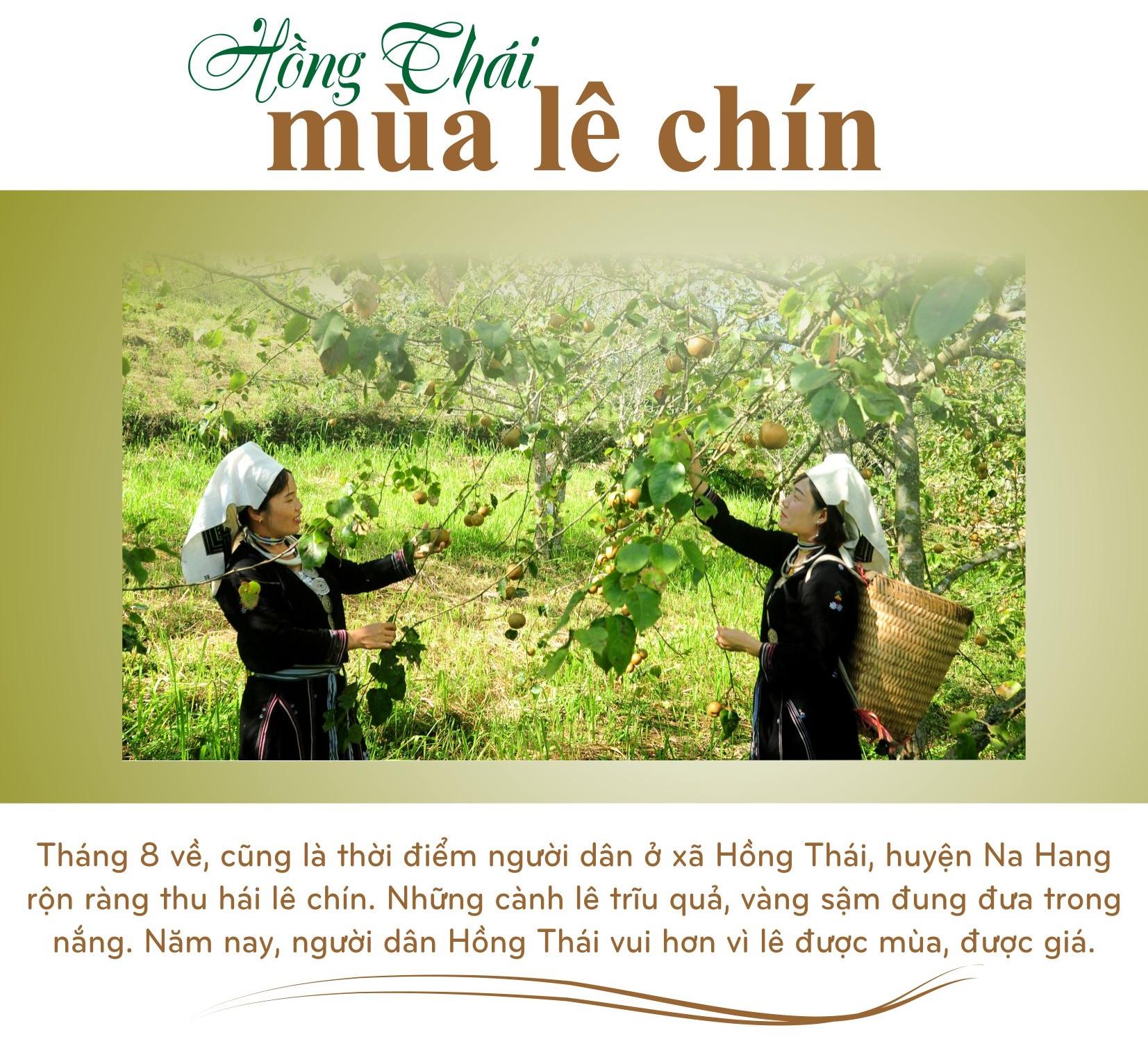dac-san-le-hong-thai