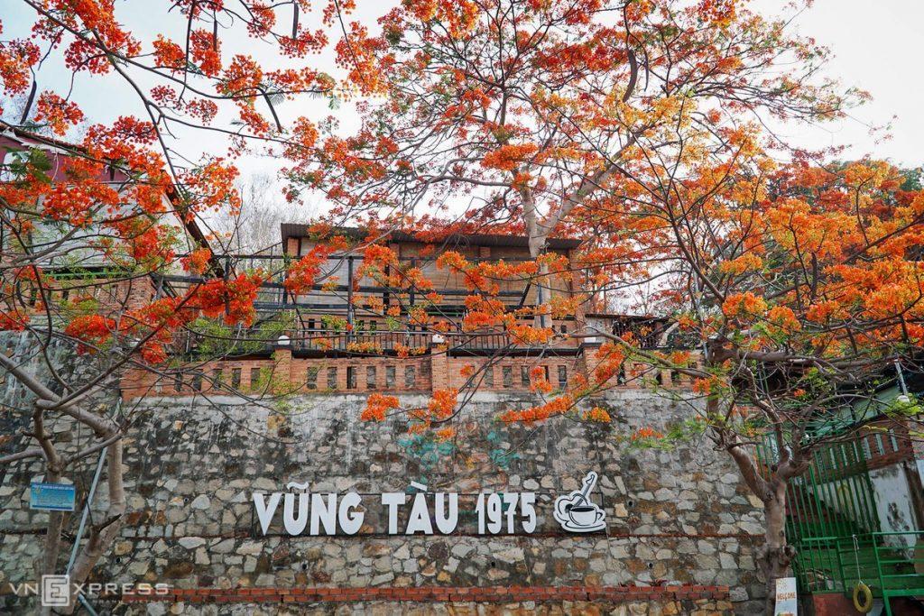 hoa-phuong-vung-tau