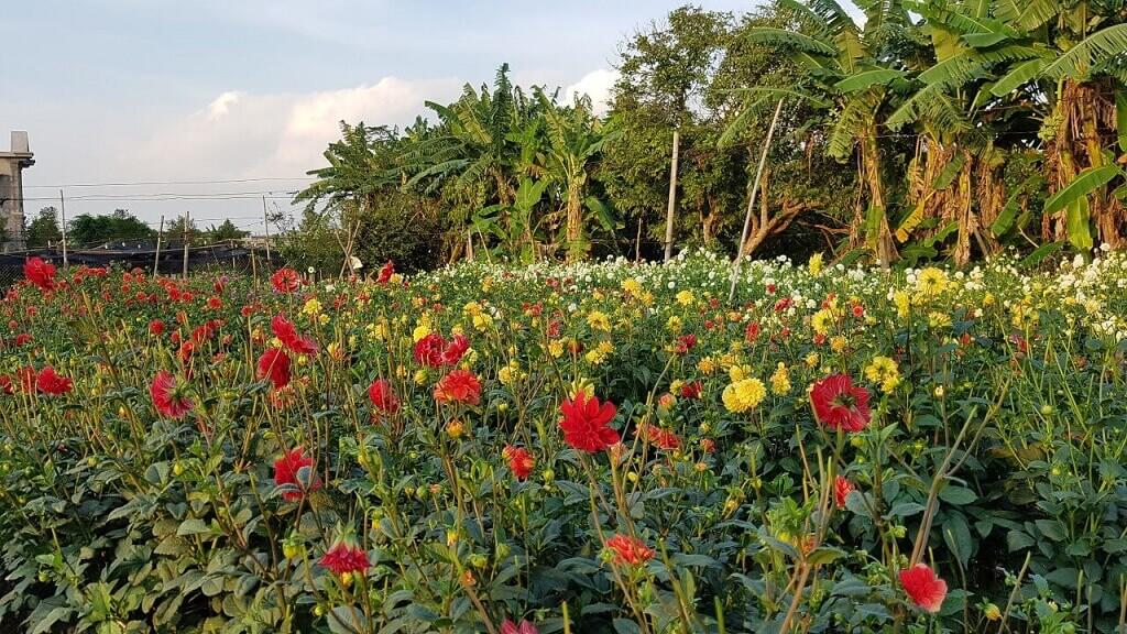 vườn hoa thái bình