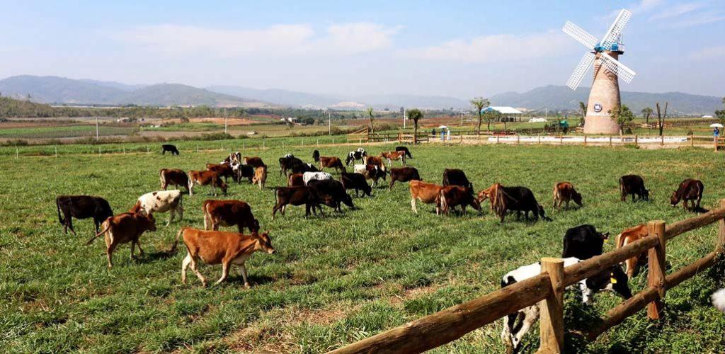 dalat-milk-farm
