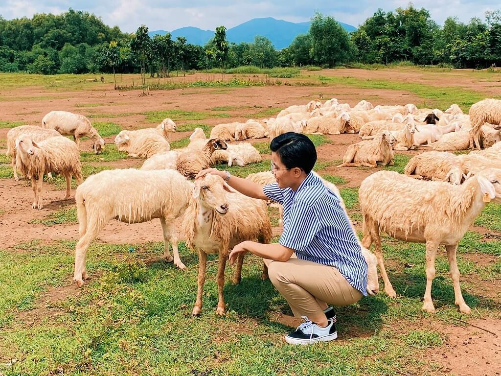 đàn cừu