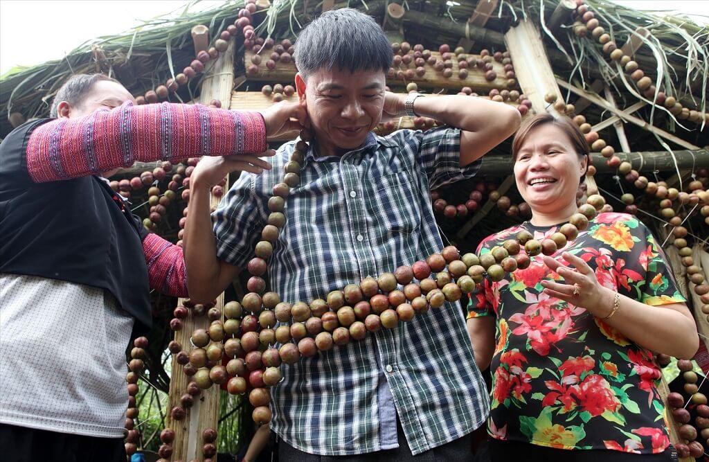 ngày hội hái quả mộc châu