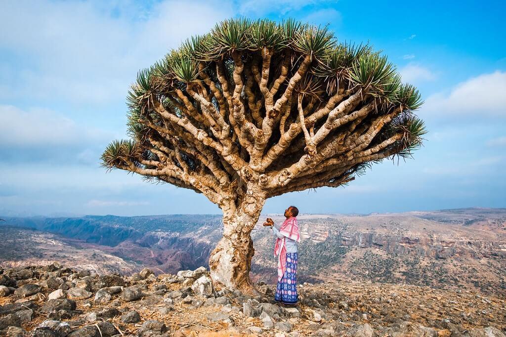 Socotra-hon-dao-ky-bi-nhat